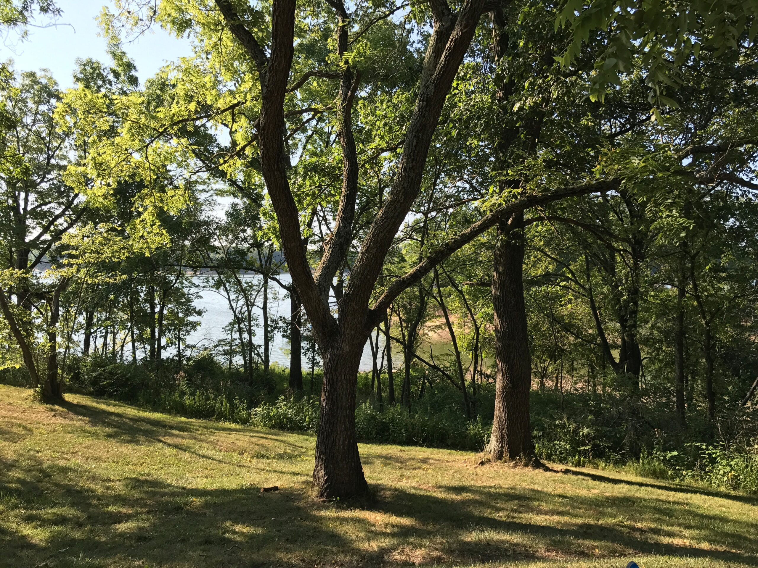 Rock Cut State Park Tree
