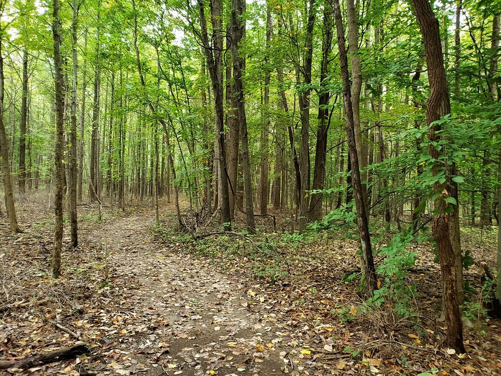 Lincoln Trail State Park Walkpath