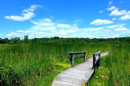 Moraine Hills State Park Landscape