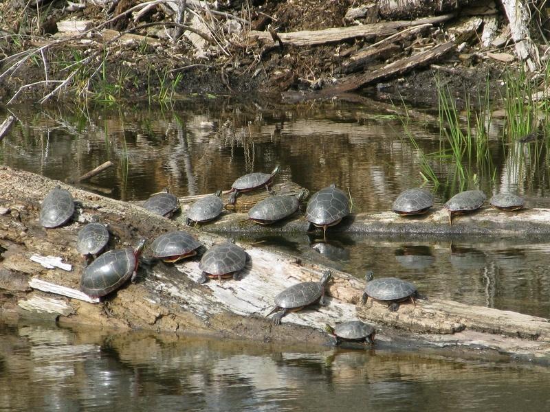 Moraine Hills State Park Turtles