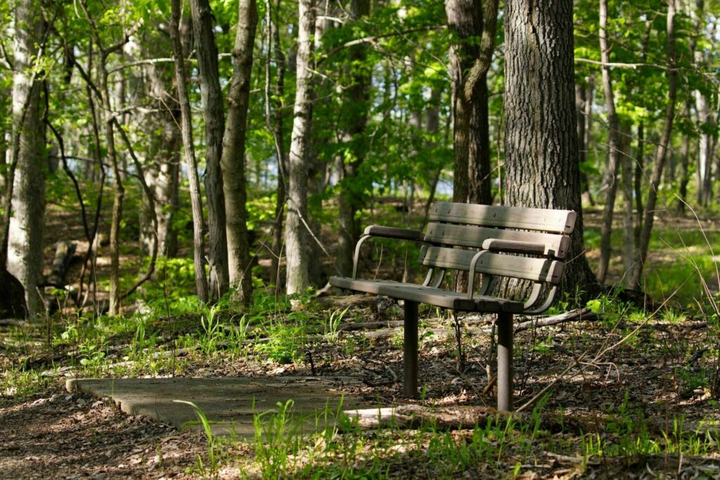 Wolf Creek State Park Bench