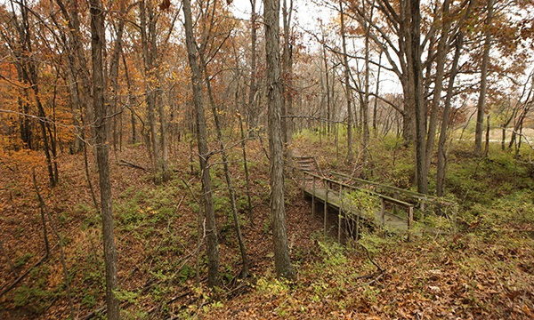 Wolf Creek State Park Trails